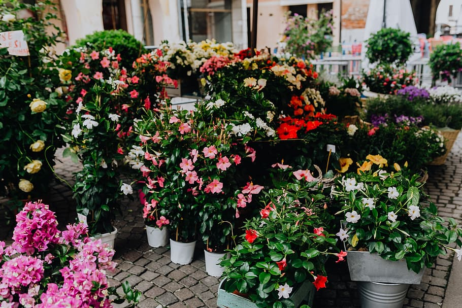 UK BLOOMS! 3 Impressive Flower Shops to visit in Liverpool